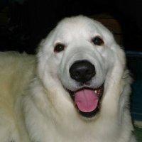 Собаки могут улыбаться. :: Святец Вячеслав