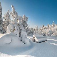 Сезонный отдых :: Владимир Чуприков