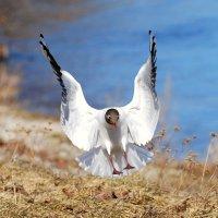 приземление :: linnud