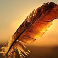 Перо в закате племенеющего лета :: Ксения Ерофеева