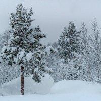 Зимний лес :: Наталья Василькова