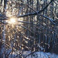 Зимнее солнце :: Сергей Залаутдинов