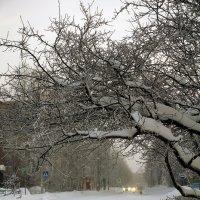 Улица Оплеснина :: Виктор Бондаренко