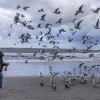 Прилетела стая птиц ... :: Михаил Юрин