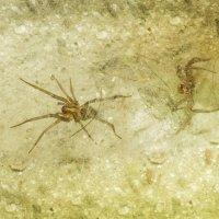 Воронковый паук :: Aнна Зарубина
