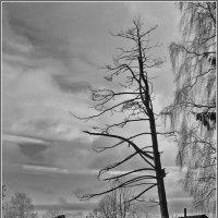 зима :: Дмитрий Анцыферов