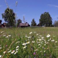 Лето за околицей :: Ната Волга