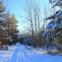Морозным зноем светится дорога... :: Лесо-Вед (Баранов)