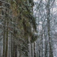 В лесу :: Иван Анисимов