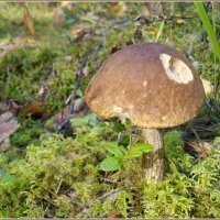 В осеннем лесу :: lady v.ekaterina