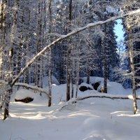 короткий зимний сон :: Olga