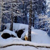 в зимней шубке великаны :: Olga