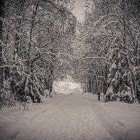 Зима :: Татьяна Гилепп
