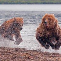 Медвежьи скачки :: Денис Будьков