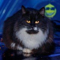 Сердитый кот греющий свою задницу на капоте автомобиля. :: Анатолий Клепешнёв
