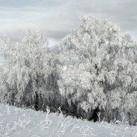 Куржак :: Константин Филякин