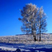 Зимняя красавица :: Кристина Воробьева