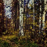 Осенний лес :: Алексей Бажан