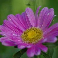 Цветок :: Jeanne B