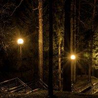Лесной спуск :: Дмитрий Фроленков