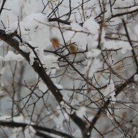 Зима идёт ... ОСЕНЬ Плачет ... :: JT --------      SHULGA  Alexei