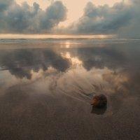 про кокос и океан :: Александр