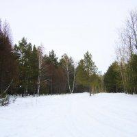 Лесная , зимняя поляна . :: Мила Бовкун