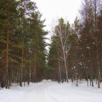 Густой лес . :: Мила Бовкун