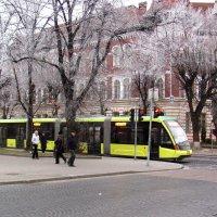 Львовский трамвайчик :: super-krokus.tur ( Наталья )