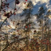 про Ноябрь :: sergej-smv