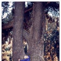 Дерево жизни :: Nika De Carolis