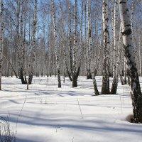 Зимний лес 1 :: victor Lion