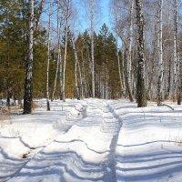 Зимний лес 2 :: victor Lion