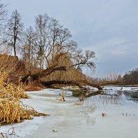 Январь  на  реке. :: Валера39 Василевский.