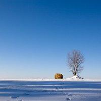 утро в поле :: Сергей Закирницкий