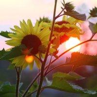 Кусочек летнего заката... :: Полина Алатырева