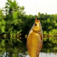 Как взмолится золотая рыбка,голосом молвит человечьим... :: Татьяна Колесникова