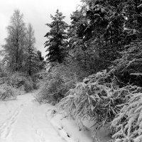 1. Лес без солнышка. Автор Саша. :: Фотогруппа Весна.
