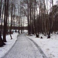 Когда повеет вдруг весною в январе - IMG_0340 :: Андрей Лукьянов