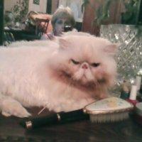 Мой кот :: Людмила