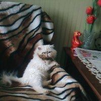 Смотрит Миша телевизор :: Людмила