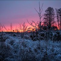 Морозное утро :: Елена Ерошевич