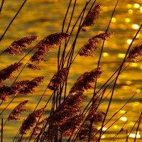 Сухоцветы на закате :: ида Слизких