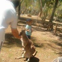 Кормление кенгуру с рук :: Герович Лилия
