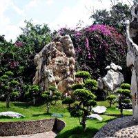В саду камней :: Наталья