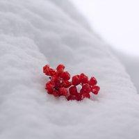 Белое и красное.. :: Елена Васильева