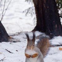 И сколько ещё орехов ждать? :: Alex Bush