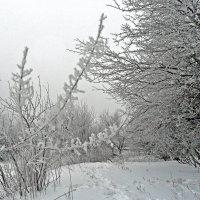 Написан серебром зимы портрет... :: Наталья
