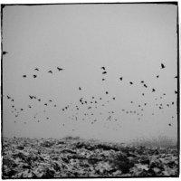 Alone :: Adam Sagdiev