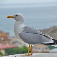 Морская чайка :: Demian